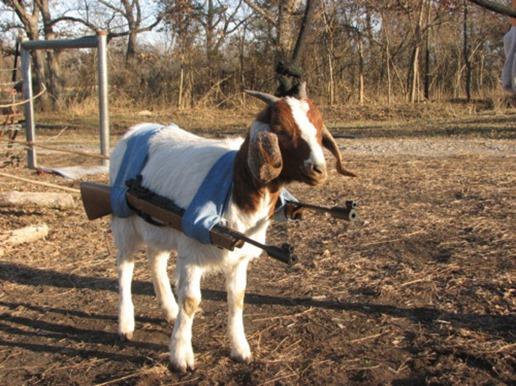 goat-gun