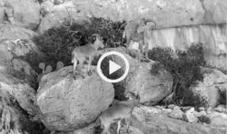 Silencerco-borderlands-video_thumb.jpg